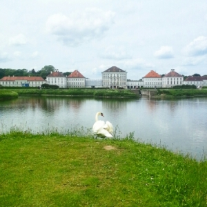 Nymphenburg Palace - swan