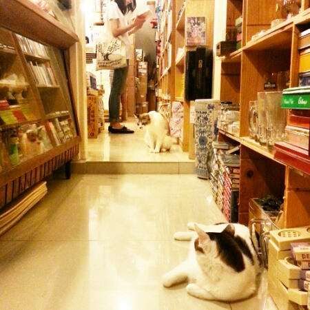 BooksActually - July 2015 - cats